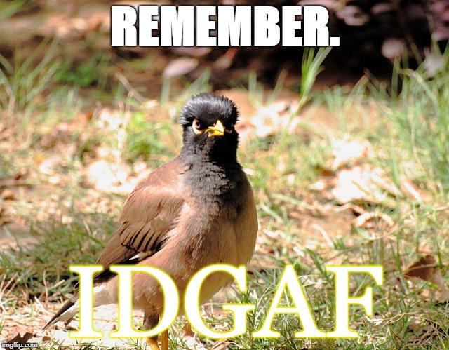 Remember. IDGAF
